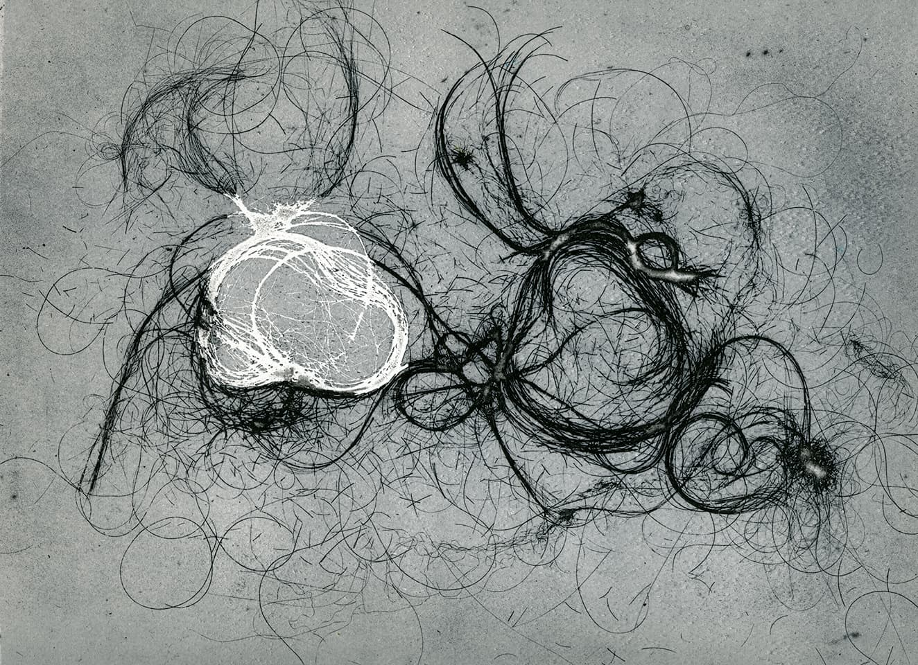 <strong>The Entangled Self 8</strong>, Susan Aldworth, etching, 25 x 31 cms, 2014.