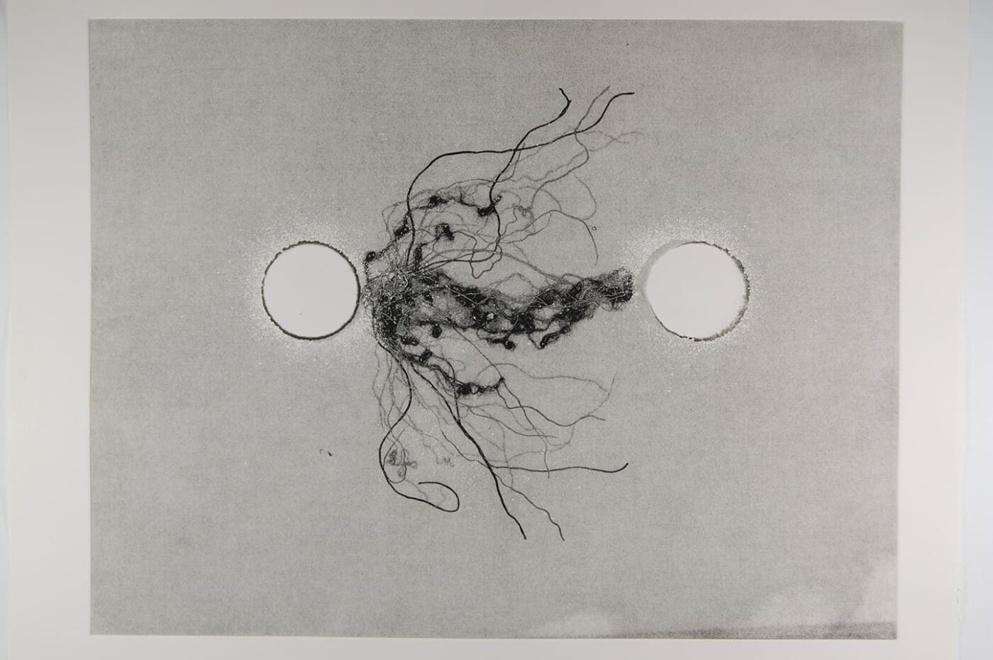 <strong>Out of Body 4.3</strong>, Susan Aldworth, monoprint, 56 x 76 cms, 2009.