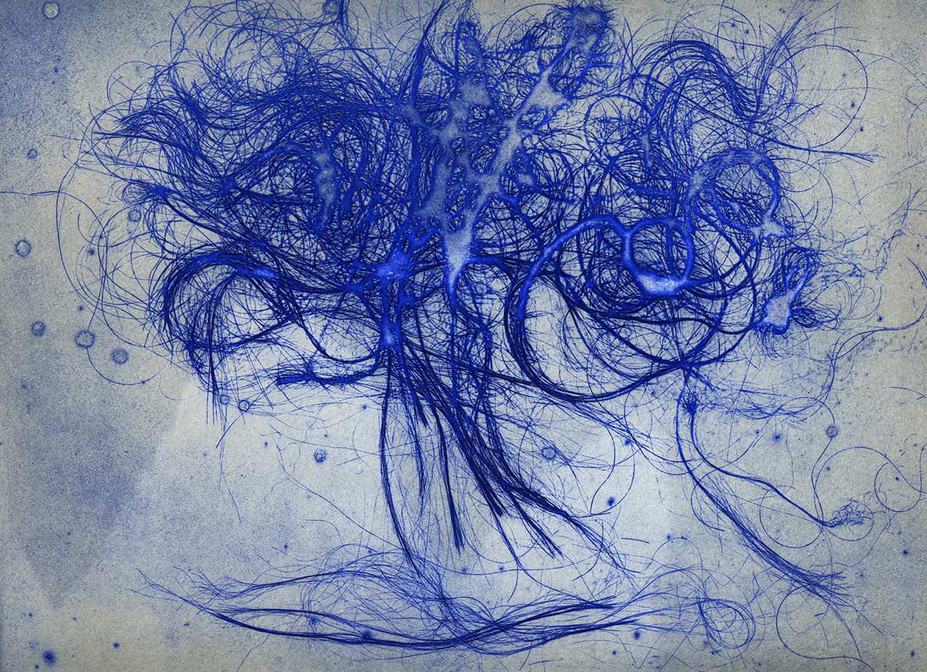 <strong>The Entangled Self 4</strong>, Susan Aldworth, etching, 25 x 31 cms, 2014.