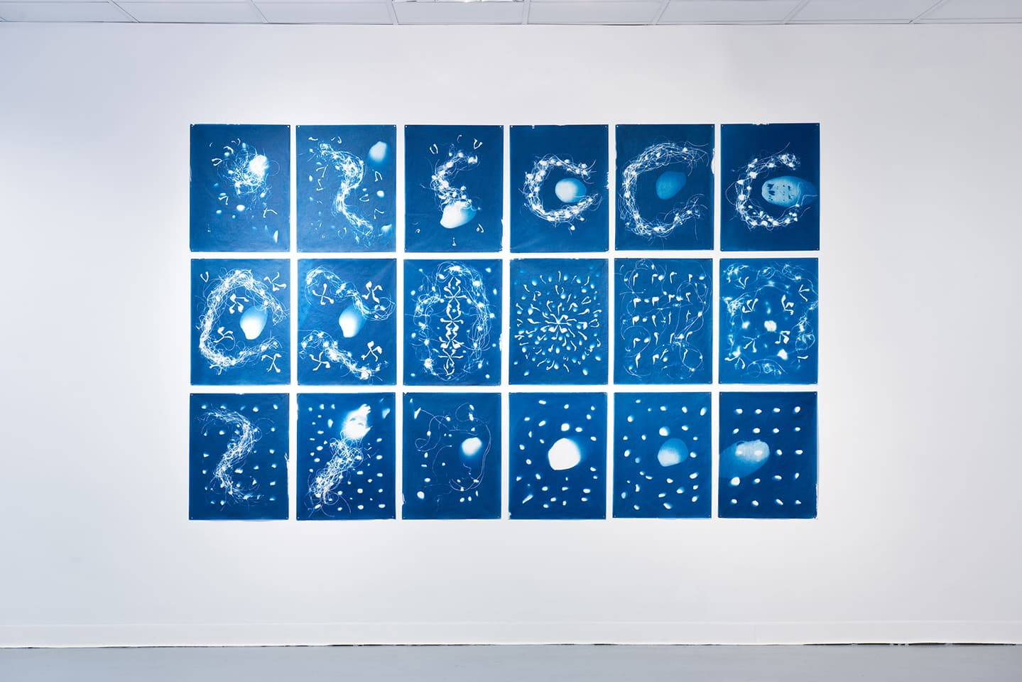 <strong>Out of the Blue</strong>, installation of 18 cyanotypes, Susan Aldworth, 1.77 x 2.82 metres, 2020. Photograph by Colin Davison at Vane.