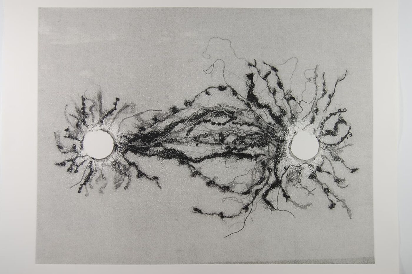 <strong>Out of Body 3.3</strong>, Susan Aldworth, monoprint, 56 x 76 cms, 2009.